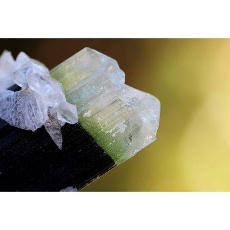 Bicolor-Turmalin-Doppelender-Energie-Kristall (Reichtum des Lebens)